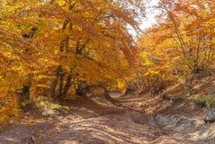 Дорога в лесе горы на сезоне падения Стоковые Изображения