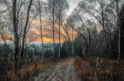 Дорога в лесе осени в вечере на заходе солнца стоковые фотографии rf