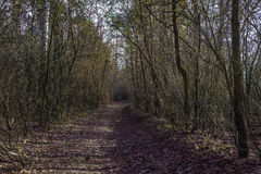 Дорога в лесе осени Стоковая Фотография RF
