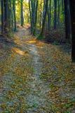 Дорога в лесе покрытом с упаденными листьями Стоковые Изображения RF
