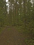 Дорога в лесе среди деревьев Стоковое Изображение RF