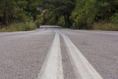 Дорога в лесе Стоковое Изображение