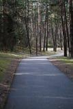 Дорога в лесе Стоковое Фото