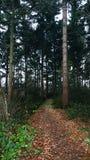 Дорога в лесе Стоковые Фотографии RF