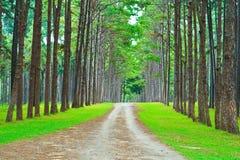 Дорога в сосновый лес стоковые фото