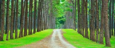 Дорога в лес сосенки стоковое изображение