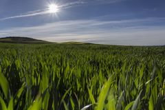 Дорога в зеленом поле весной Стоковые Изображения
