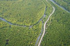 Дорога в зеленом лесе мангровы на заливе Phang Nga южном t Стоковое Изображение