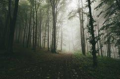 Дорога в зеленом лесе с загадочным туманом Стоковое фото RF
