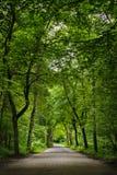 Дорога в зеленом лесе Стоковое Фото