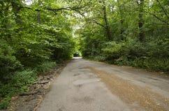 Дорога в лиственном лесе Стоковые Фото