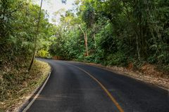 Дорога в лесе горы стоковые изображения rf