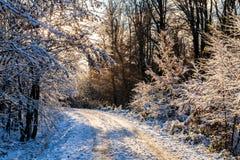 Дорога в лесе зимы покрытом с снегом Стоковая Фотография RF