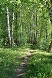 Дорога в лесе лета Стоковые Фото