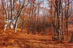 Дорога в лесе осени Стоковое фото RF