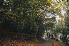 Дорога в лесе осени стоковые фотографии rf