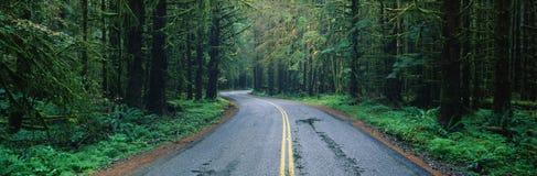 Дорога в олимпийском национальном парке, WA стоковое изображение rf