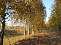 Дорога в осени стоковое фото rf