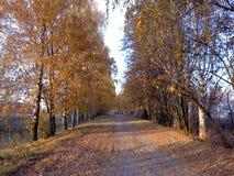 Дорога в осени стоковая фотография rf