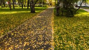 Дорога в осени Стоковые Изображения