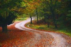Дорога в осеннем лесе Стоковые Фото