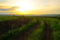 Дорога вдоль поля овса Стоковая Фотография RF