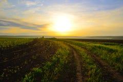 Дорога вдоль поля овса Стоковые Изображения RF