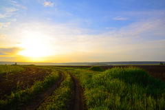 Дорога вдоль поля овса Стоковое Фото