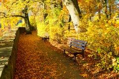 Дорога в парке осени Стоковые Изображения RF
