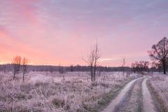 Дорога в поле с цветками и травой в белом заморозке на зоре Красивая последняя осень, начало зимы Стоковое фото RF