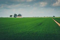 Дорога в поле Стоковые Фото