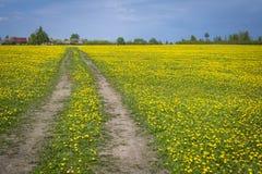 Дорога в поле Стоковые Изображения RF