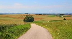Дорога в полях Стоковая Фотография