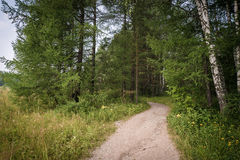 Дорога в пуще лета Стоковые Фото