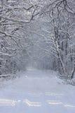 Дорога в пуще зимы Стоковое Изображение RF