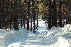 Дорога в пуще Стоковое фото RF