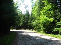 Дорога в пуще Стоковые Фотографии RF