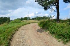 Дорога в пуще Стоковое Изображение
