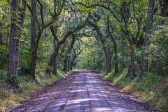 Дорога в пуще Стоковая Фотография