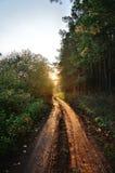 Дорога в древесине Стоковые Изображения