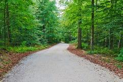 Дорога в древесине стоковые изображения rf