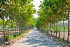 дорога в резиновом дереве Стоковая Фотография