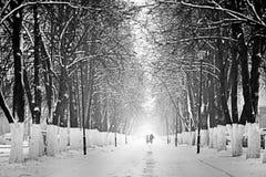 Дорога в снежном лесе Стоковая Фотография RF