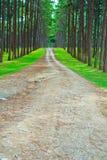 Дорога в сосновый лес стоковое изображение