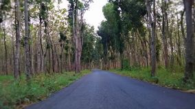 Дорога в среднем лесе между деревьями стоковые фотографии rf