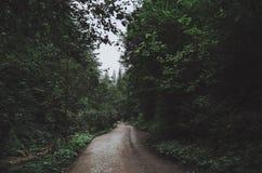 Дорога в темном лиственном лесе стоковое изображение rf
