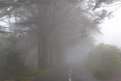 Дорога в тумане в облаке в горах острова Мадейры, Португалии Стоковое фото RF