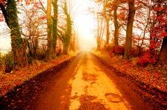 Дорога в тумане a осени Стоковое Изображение RF