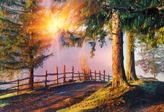 Дорога в тумане утра Стоковые Изображения