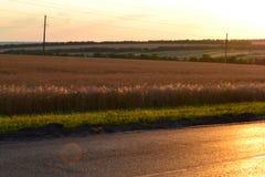 Дорога в лучах спада стоковое изображение rf